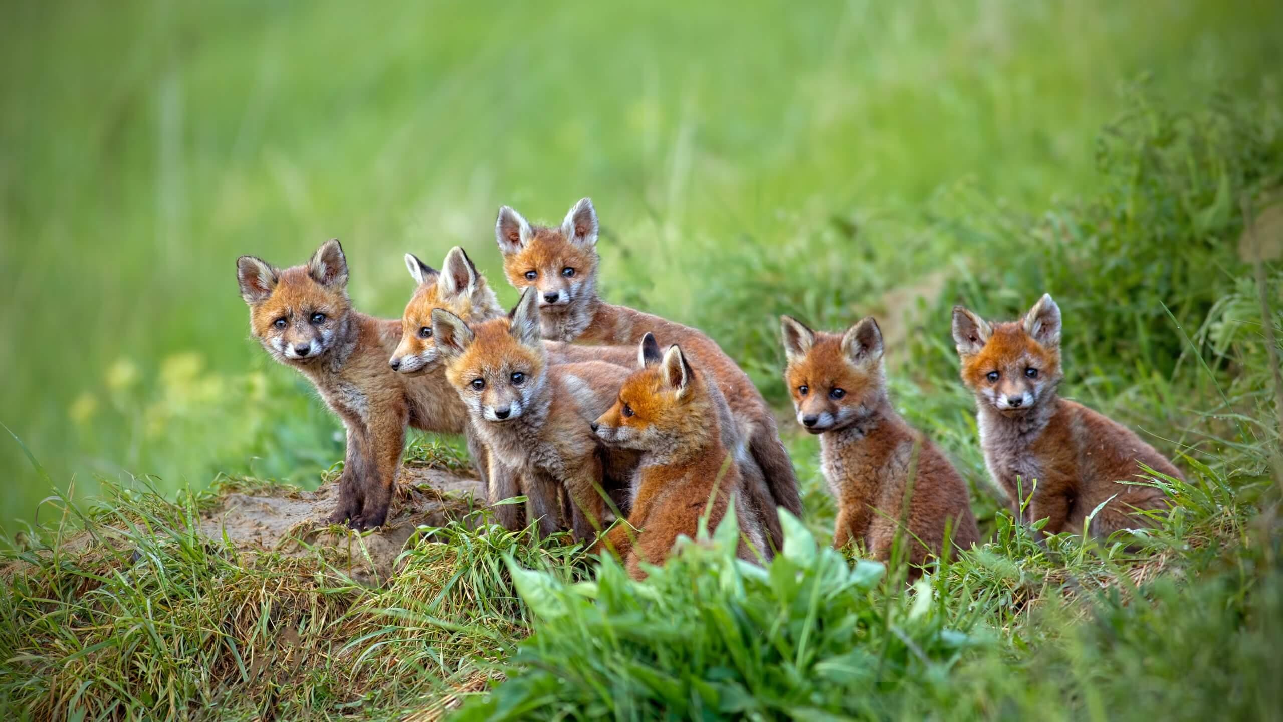 Άγρια ζώα της Ολλανδίας - SuperGreeks